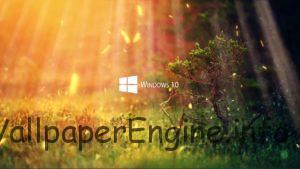 Nature 1080P - Windows 10 Series