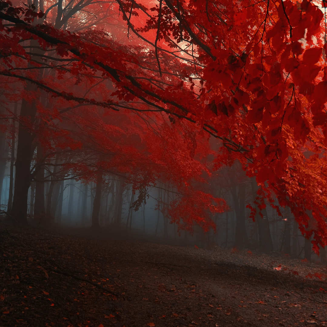 Autumn (Dual Monitor)