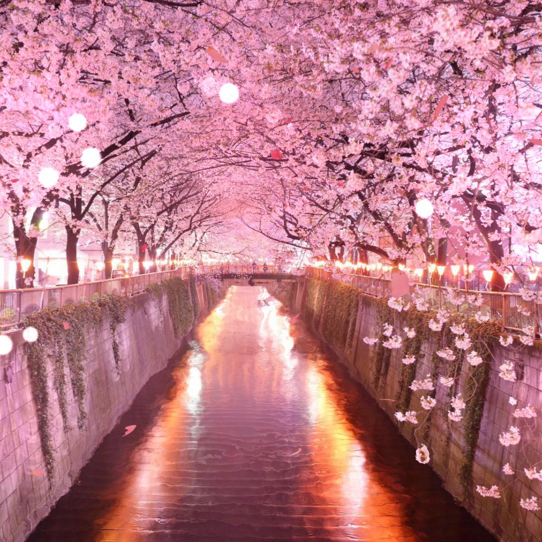 Tunel De Sakura
