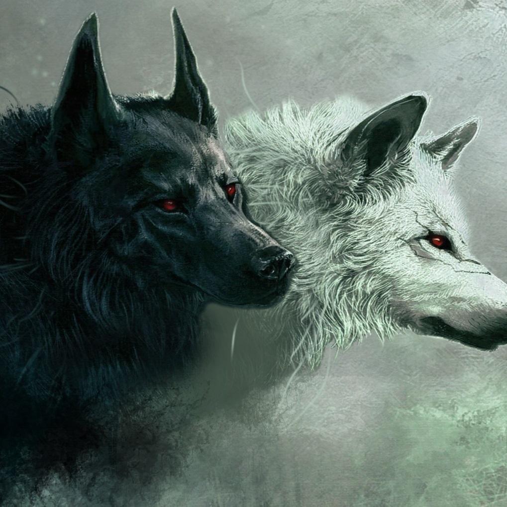 Black&White wolves